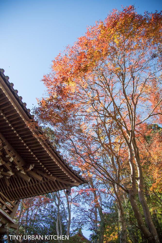 Hiking Mount Takao Japan